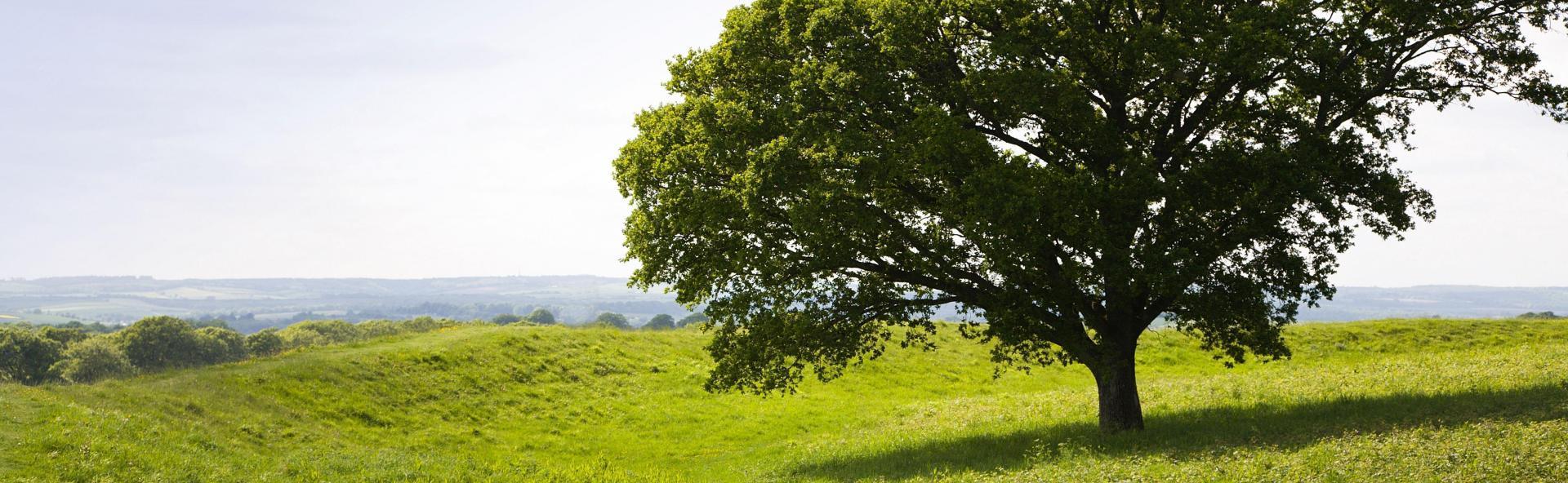 baner z drzewem eng